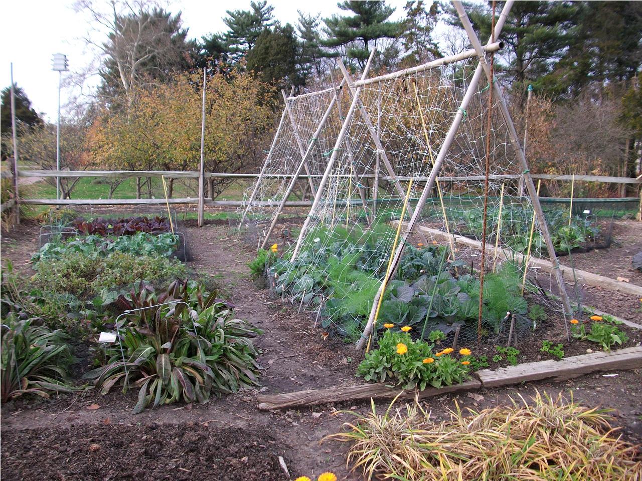 Zone 7 Vegetable Planting Calendar Schedule Veggieharvest Com